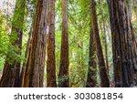 muir woods national monument | Shutterstock . vector #303081854
