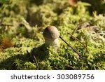 mushroom in moss | Shutterstock . vector #303089756