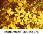 Autumn Yellow Leaves Backgroun...