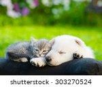 Stock photo white swiss shepherd s puppy and small kitten sleeping together 303270524
