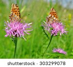 Small photo of Butterflies Fabriciana aglaia sitting on a flower