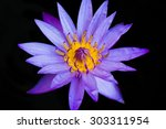 purple water lily center... | Shutterstock . vector #303311954