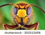 Hornet Macro Shot Nature