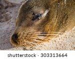 Closeup Portrait Of Sea Lion...