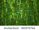green ivy covered wall as... | Shutterstock . vector #303376766