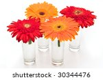 orange and red daisy flowers in vases on white - stock photo