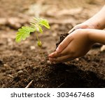 kid hand giving organic compost ... | Shutterstock . vector #303467468