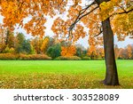 beautiful maple with yellow...   Shutterstock . vector #303528089