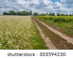 ukrainian agricultural... | Shutterstock . vector #303594230