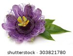 The Purple Passionflower...