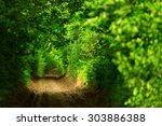 tunnel  like path covered with...