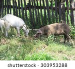 Goat And Pig On The Grass