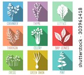 fresh herbs and spices flat... | Shutterstock .eps vector #303961418
