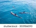 dolphin pod | Shutterstock . vector #303986093