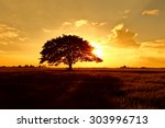 Silhouettes Of A Tree In The...