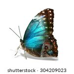Colorful Exotic Butterfly On...