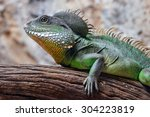 physignathus cocincinus on... | Shutterstock . vector #304223819