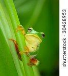Adorable Tree Frog