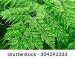 fresh green fern leave in the... | Shutterstock . vector #304292333