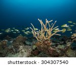 Small photo of The staghorn coral (Acropora nobilis)