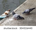 bird eating  | Shutterstock . vector #304326440