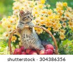 Stock photo cute kitten in the basket with apples in the garden 304386356