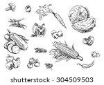 sketches of food  vegetables   Shutterstock .eps vector #304509503