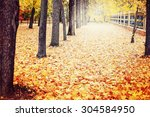 Autumn. Fall. Autumnal Park....