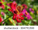 Butterfly Flower Zinnia On...