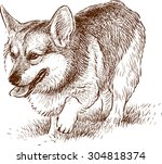 welsh corgi on a walk  | Shutterstock .eps vector #304818374