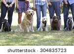 group of dogs with owners at... | Shutterstock . vector #304835723