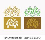 potato plant with leaves and...   Shutterstock .eps vector #304861190