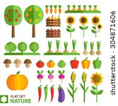 set of plants  fruits and... | Shutterstock .eps vector #304871606