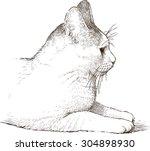white domestic cat | Shutterstock .eps vector #304898930