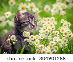 Stock photo portrait of cute little kitten outdoors in flowers 304901288