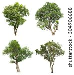collection of isolated tree on... | Shutterstock . vector #304906688