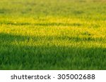 green grass background. blurred ... | Shutterstock . vector #305002688
