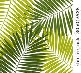 palm leaf  background ... | Shutterstock . vector #305016938