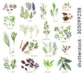 collection of watercolor hand... | Shutterstock . vector #305099258