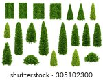 Set Of Thuja And Juniper Trees...