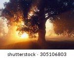 picturesque summer landscape...   Shutterstock . vector #305106803