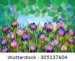 illustration of purple crocus... | Shutterstock .eps vector #305137604