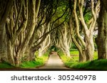 Dark Hedges In Armoy  Northern...