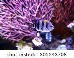 The African Malawi Cichlids....