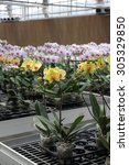 Flower nursery  - stock photo