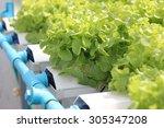 Small photo of Hydro-phonic Farm