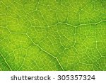 Structure Of Leaf Natural...