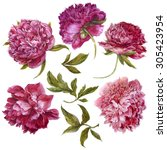 Set of watercolor dark pink peonies, separate flower, leaf, sprigs, isolated watercolor illustration.