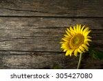 Single Fresh Yellow Sunflower ...