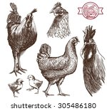 sketches of cocks  hens and... | Shutterstock .eps vector #305486180